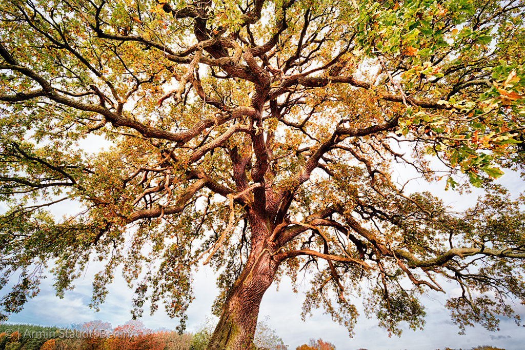extreme wide-angle shoot of a beautiful lime tree in autumn
