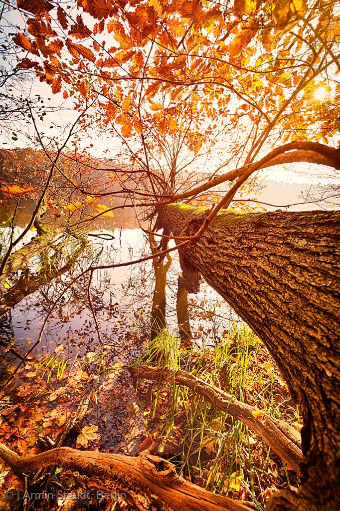 fallen autumn tree in a lake