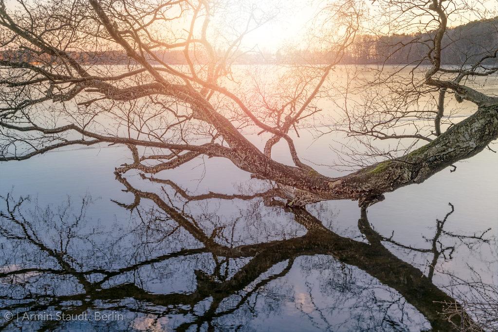 tree log mirroring in a lake during sunset